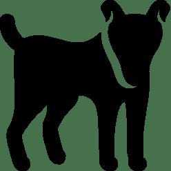 dog_256